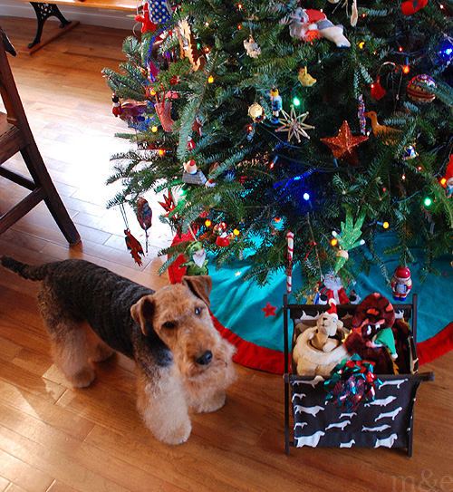 Miles Opens His Christmas Presents