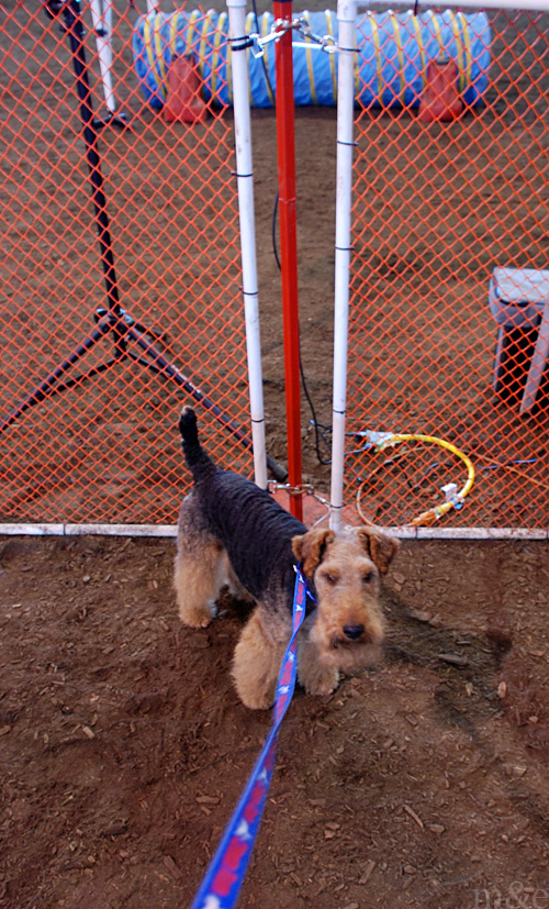 Our Third Agility Trial