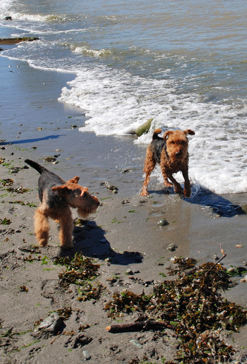 Miles and Axel Hit the Beach