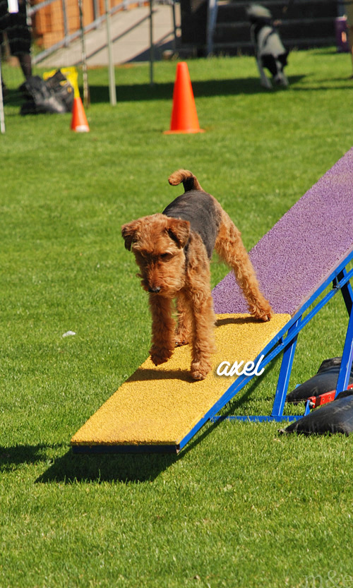 Outdoor Agility