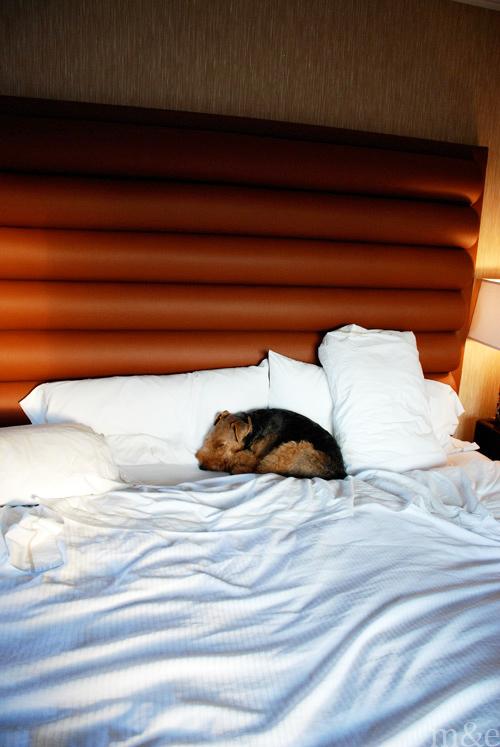 M&E's Dog Photography Tips