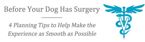 dogsurgeryplanning