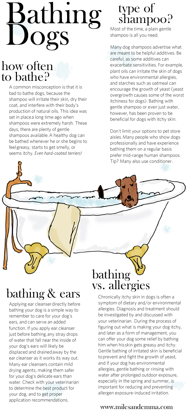 Bathing Dogs