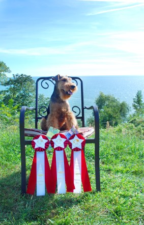 Adventures in Lake Country: Visiting Family and a Agility Steeplechase Win!