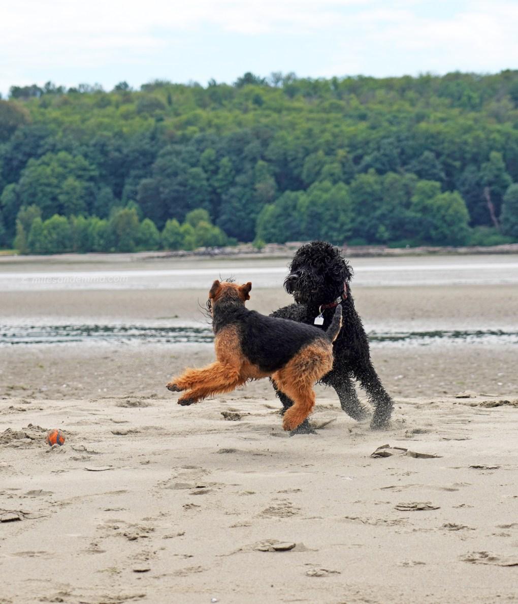 Miles & Vasco Hit the Beach!