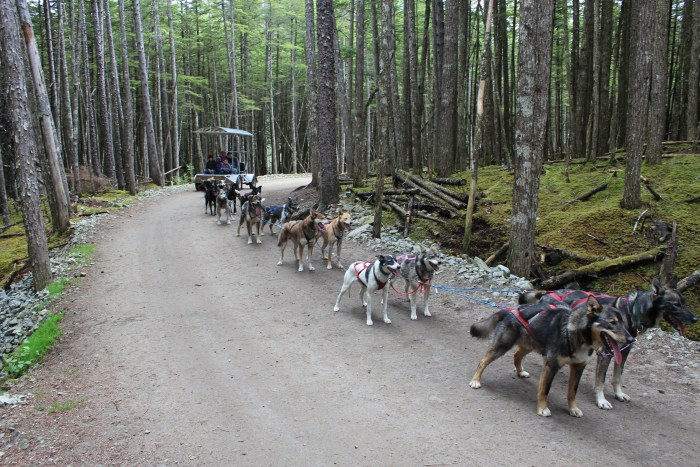 Texans in Alaska: Dog Sledding in Skagway
