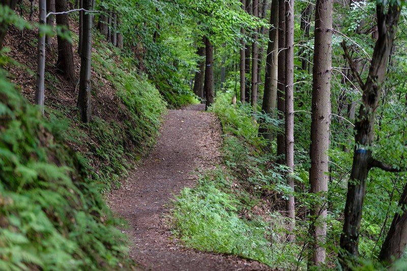 Trees Hiking Path
