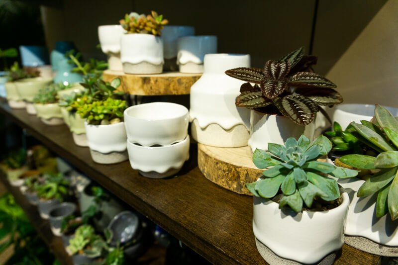 potted succulents on wood shelf