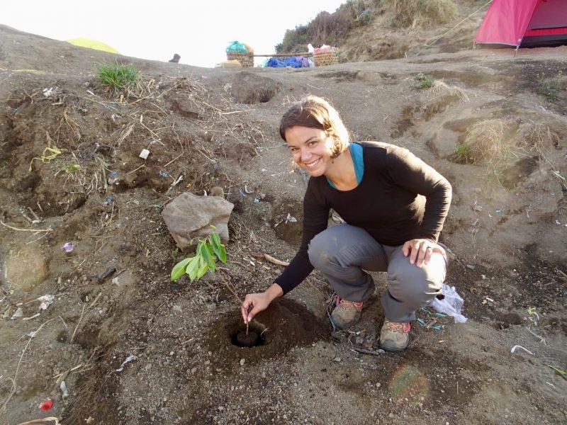 Planting a tree on Mt. Rinjani crater rim