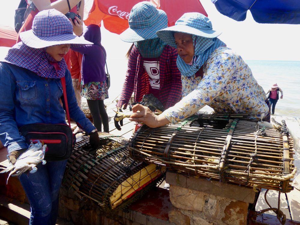 Crabs in Kampot Cambodia