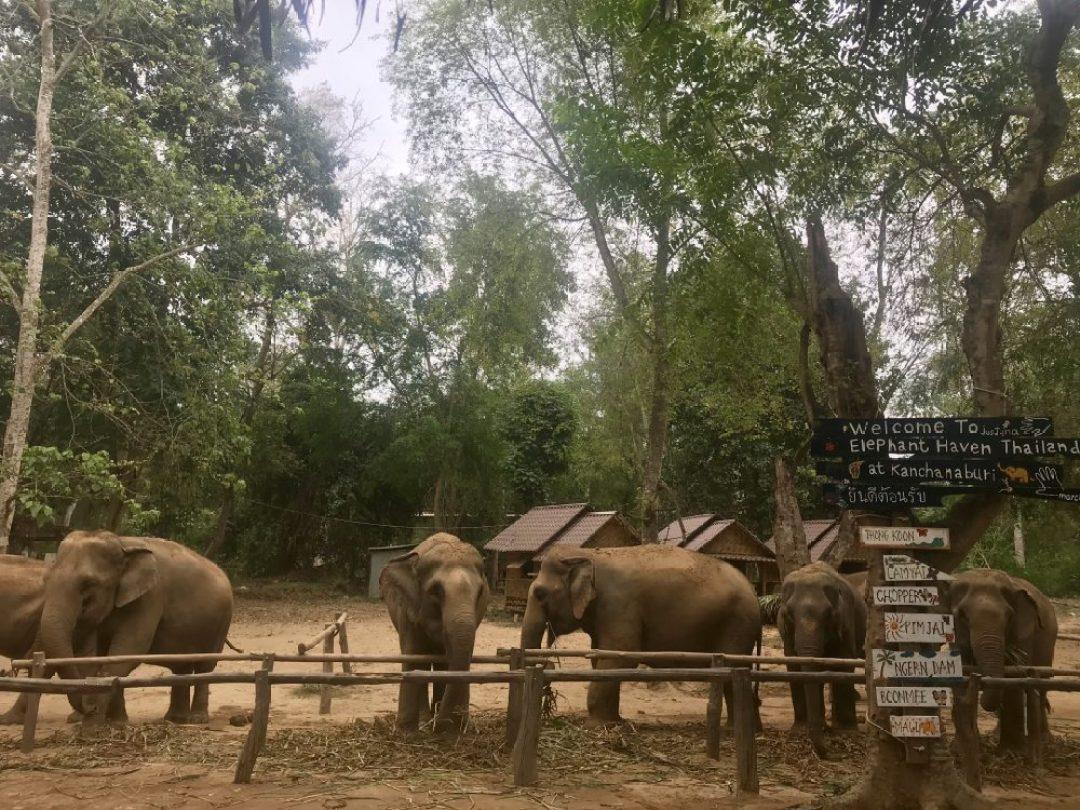 Welcome to Elephant Haven Kanchanaburi