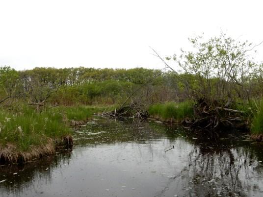 Lake Waubesa Wetlands