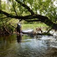 Allen Creek