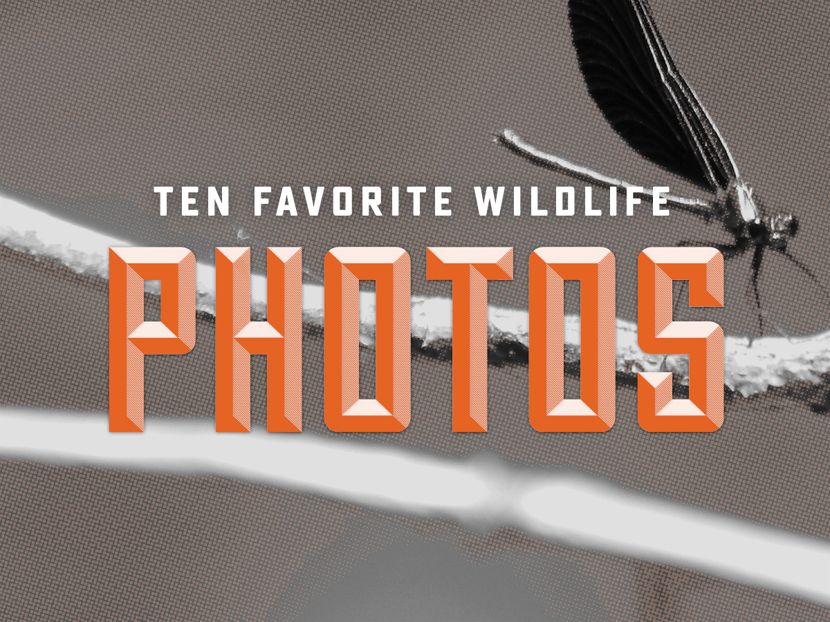10 Favorite Wildlife Photos