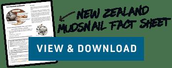 New Zealand Mudsnail Fact Sheet