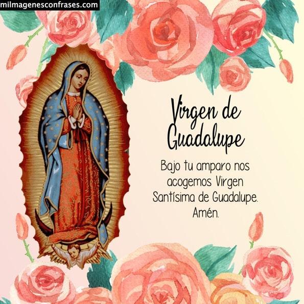 virgen de guadalupe 12 de diciembre