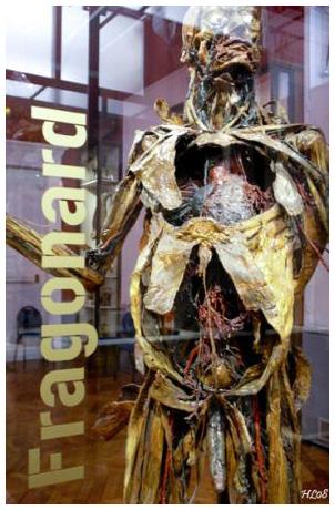 Mardi c'est anatomie (2/4)