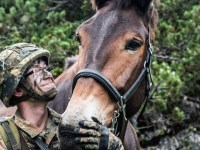 Pack animals – the German Mountain Infantry Brigade