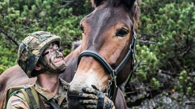 Member of the German Mountain Infantry Brigade stands next to a mule while on exercise Mountain Lion in the Alps.