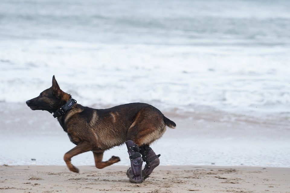 Kuno underwent extensive rehabilitation under the watchful eye of Army vets and is fitted with prosthetics that allow him to run and play