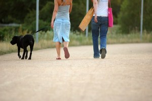 Tips to keep your dog safe during the summer months.