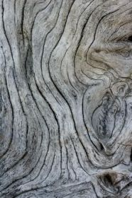 wood-grain-3