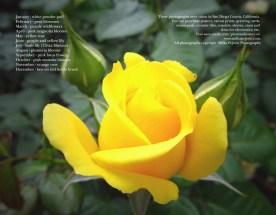 2015 flower and bloom calendar - back cover