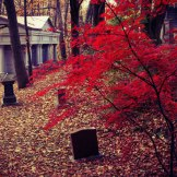 Mount-Pleasant-Cemetery-autumn