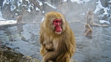 Jigokundani Monkey Park