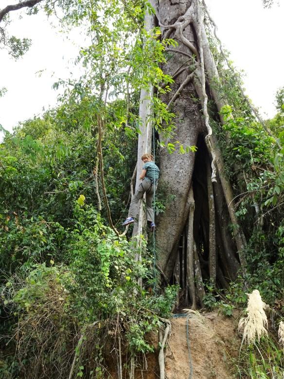 L'arbre magique 3