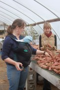 meadow and gretchen working on sweet potatoes