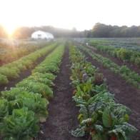 Sunrise over the farm