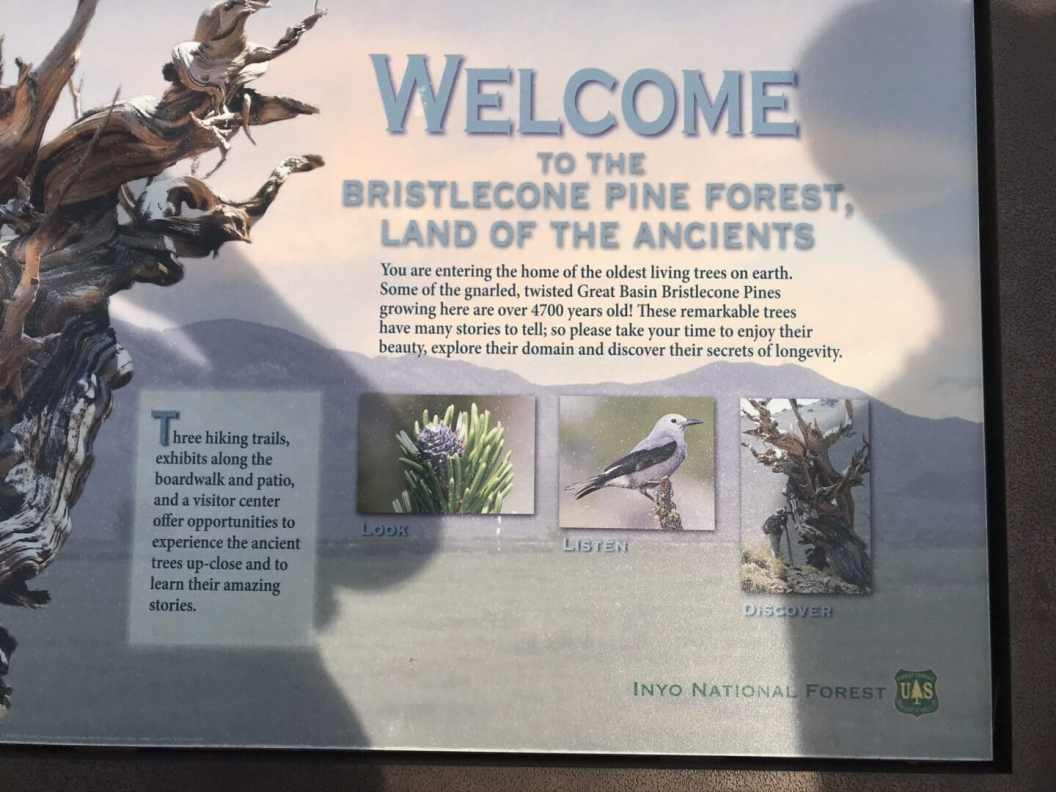 Welcome to the Bristlecone Pine Forest.