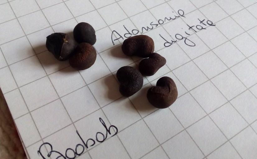 Baobab, Adansonia digitata