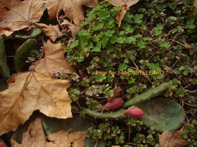 piante grasse adatte al nostro clima