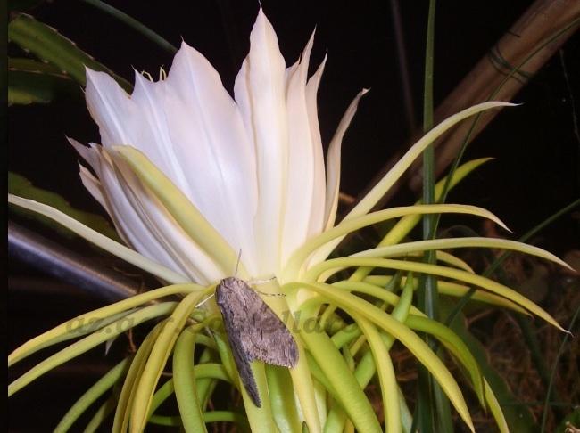 Profumi e puzze delle piante grasse: raccontiamoli col naso