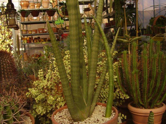 piante grasse a Parma
