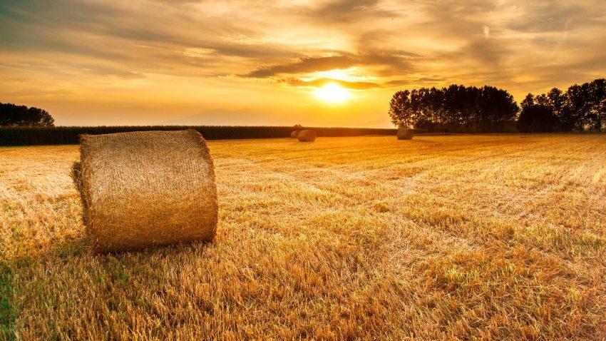 Plan PIMA para la compra de maquinaria agrícola