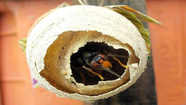 ¡No-dejan-de-sorprendernos!-Los-perros-detectan-nidos-de-Vespa-Velutina-2-1920