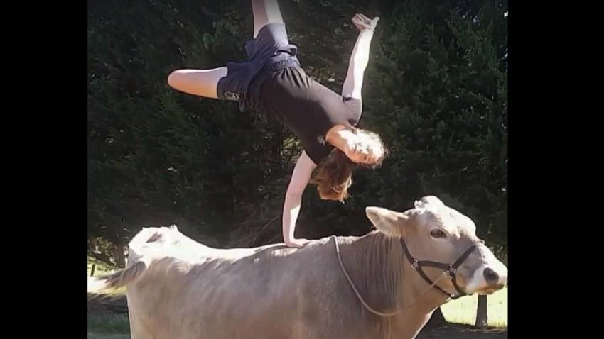 Cuando una vaca se cree un caballo.1920