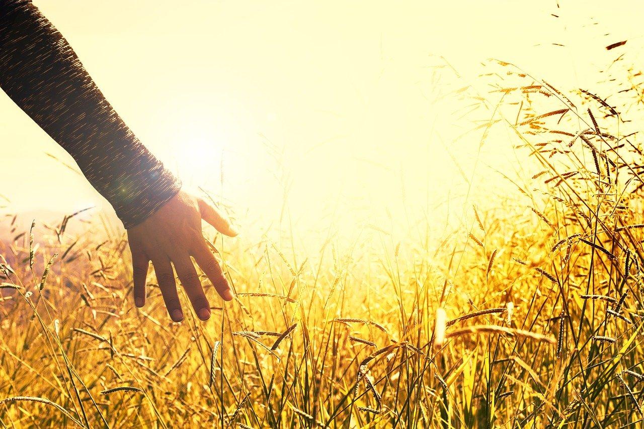 main dans les blé