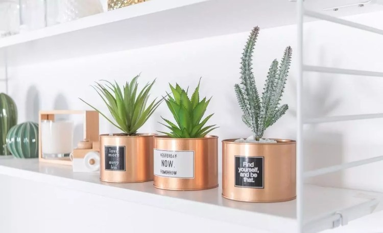 office stress relief gadget plants