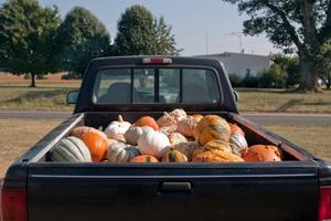 Pickup full of pumpkins