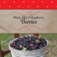 berries-inThePatch