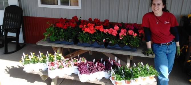 Bedding plants, Herbs, Hanging Baskets! Tomato Plants!