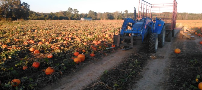 Strawberry Planting is done!  Hayrides start this Saturday, Sept 30.