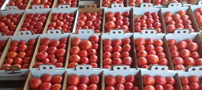 Tomatoes!  $10/flat!  Come and get 'em!