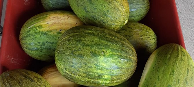 Spanish Melons!  Watermelons!  Sweet Corn!