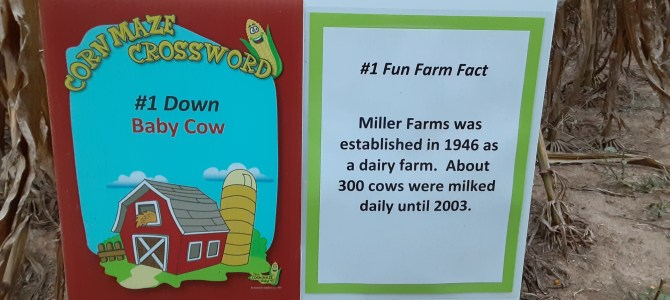 Perfect weather to explore our 8 acre corn maze and learn about Miller Farms
