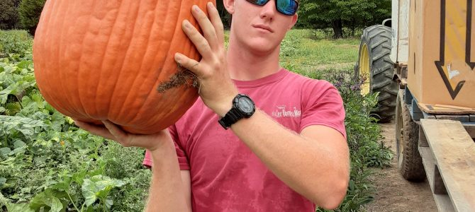 Have you picked your BIG PUMPKIN yet?